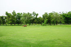 Green grass filed. Stock Photos