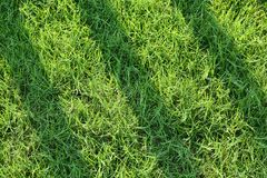 Green Grass filed Stock Photo