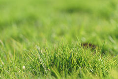 Green grass in first warm spring sunny days Stock Photo