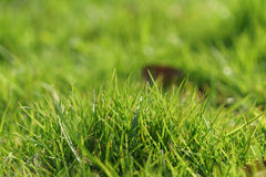 Green grass in first warm spring sunny days Royalty Free Stock Photo