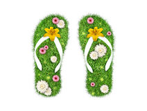 Green grass Flip-flops isolated Stock Image