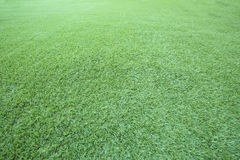 Green grass floor use as natural background,backdrop and texture Stock Photo