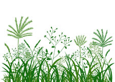 Green grass flower background, nature vector illustration. Green grass flower background illustration, nature vector Stock Photo