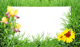 Green grass, flower, butterfly and sheet of white paper Royalty Free Stock Photography