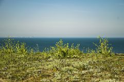 Green grass and flower on the coast. Green grass flower coast blue sky sea spring summer royalty free stock images