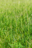 Green grass flower field Stock Image