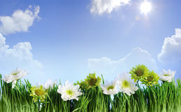 Green grass flower frame Royalty Free Stock Photo