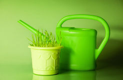 Green grass in flowerpot and watering can Stock Image