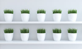 Green grass in flowerpots Royalty Free Stock Photography