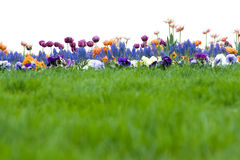 Green grass and flowers. The very green grass and flowers on field Royalty Free Stock Photos