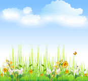 Green Grass with flowers Stock Image