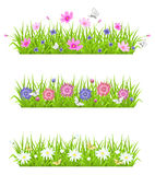 Green grass and flowers Royalty Free Stock Photo