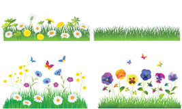 The Green Grass and Flowers. Stock Photography