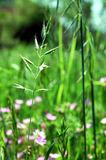 Green grass and flowers. Macro view of overgrown green grass and flowers in meadow or field Stock Images