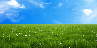 Green grass flowers and blue sky Royalty Free Stock Image