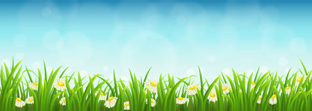 Green grass, flowers and blue sky. Fresh green grass, daisies and blue sky, vector illustration Stock Photography