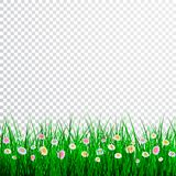 Green Grass with flowers Border Set, Vector Illustration.  Stock Image