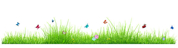 Green grass with flowers and butterflies. Green grass  on white background with flowers and butterflies. Vector illustration Stock Photography