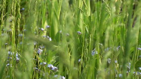 Green Grass And Flowers stock video