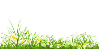Green grass and flowers. Green grass and daisies on white background, vector illustration Stock Photos