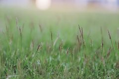 Green grass and flowers in a field stock photos