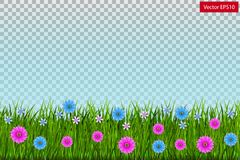Green grass with flowers isolated on transparent background. Vector Stock Photo