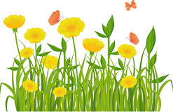 Green grass and flowers isolated on white. Green grass and yellow flowers with butterflies Royalty Free Stock Images