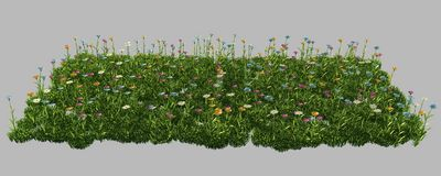 Green grass with flowers. isolated on white background 3d render. Ing Royalty Free Stock Image