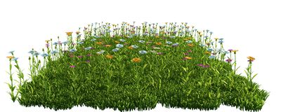 Green grass with flowers. isolated on white background 3d render. Ing Royalty Free Stock Photos