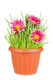 Green grass and flowers  in a pot Stock Photo