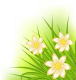 Green grass with flowers, spring background Royalty Free Stock Photo