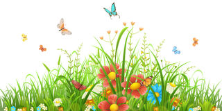 Green grass and flowers Royalty Free Stock Images