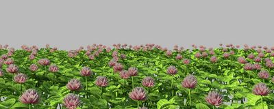 Green grass with flowers.  on white background 3d render Stock Images