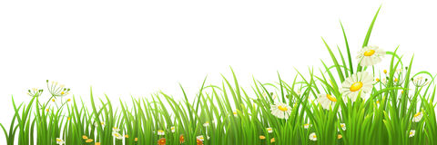 Green grass and flowers. On white, vector illustration Stock Photography