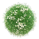 Green grass with flowers, world made with grass Royalty Free Stock Photo