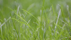 Green grass with focus point stock video footage