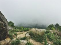 Green Grass on Foggy Mountain Stock Photography