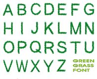 Green grass font Royalty Free Stock Image