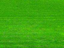 Green grass on the football field background royalty free stock photography