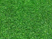 Green grass. Green football field grass fresh high detailed grass Royalty Free Stock Photos