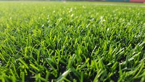 Green grass of a football field royalty free stock photography