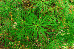 Green grass in the forest closeup, top view. Royalty Free Stock Photography