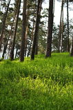 Green grass in forest Stock Photo