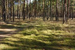 Green Grass in the Forest. Green Grass and sunlight in the Forest Royalty Free Stock Photos