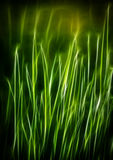 Green grass Fractal, spring Royalty Free Stock Photos