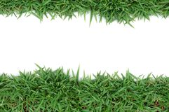 Green grass frame. Green grass on white background Royalty Free Stock Images