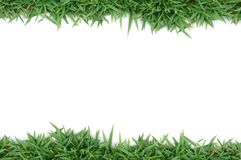 Green grass frame. Green grass on white background Royalty Free Stock Photos