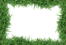 Green grass frame. Green grass on white background Stock Image