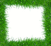 Green grass frame Royalty Free Stock Images