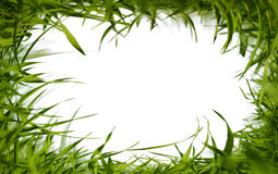 Green grass frame Stock Images